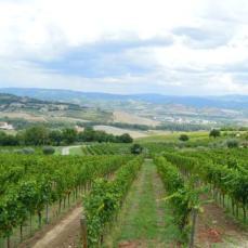 altarocca-wine-resort (1)