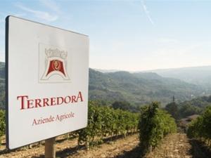 terredora-dipaolo-irpinia-wines-29065