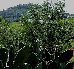 260px-Panorama_Montiano_(GR).jpg
