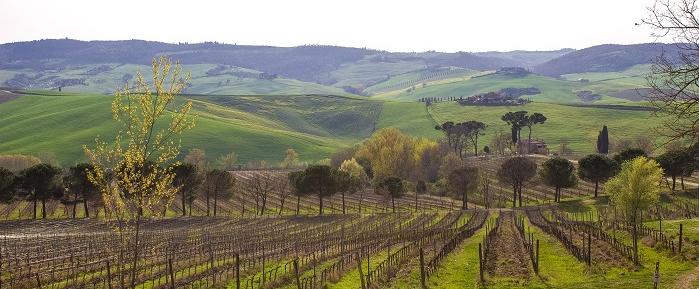 talosa-vineyard-montepulciano